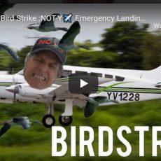 Airplane Bird Strike: NOT-Y Emergency Landing, birds hits plane, pilot life